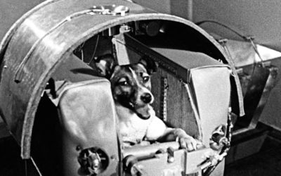 Hundebur i romskipet